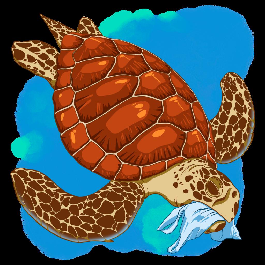 Las especies de tortugas marinas, nuestro logo y su significado